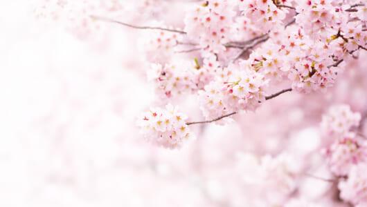 年1000冊の読書量を誇る作家が薦める、「桜」をテーマにした5冊
