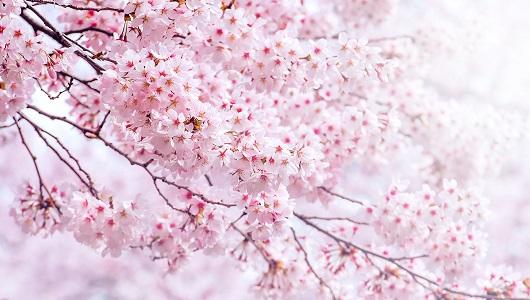 ほっこりしたいときに! 春を呼び込む「エレクトロニカ」30曲