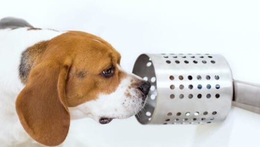 約97%の的中率! 「犬の嗅覚」がガンの発見に役立つことが判明