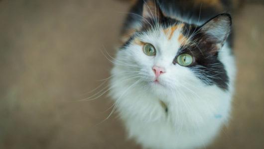 やっぱりそうでしたか……「猫」は自分の名前を聞き分けていた