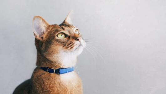 猫をIoTで見守る「Catlog」、首輪に隠されたテクノロジーとは?
