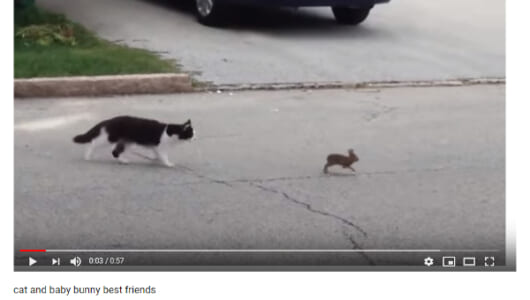 【必見オモシロ動画】ネコに追い詰められ震え上がる子ウサギ… の意外な結末とは!?