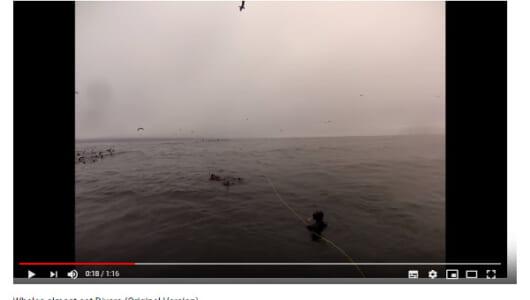 【必見オモシロ動画】シュノーケリングを楽しんでいただけなのに… 巨大なクジラがダイバーを襲う!?