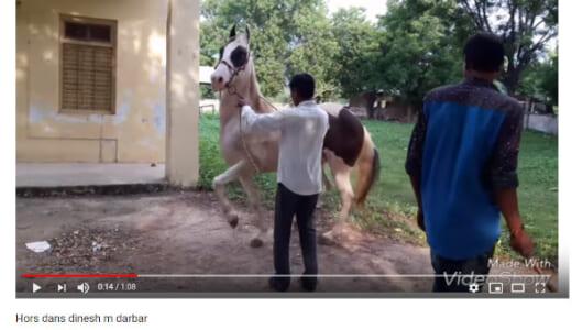 【必見オモシロ動画】テンション上がって2足歩行!? 音楽にノッてリズミカルに躍る馬