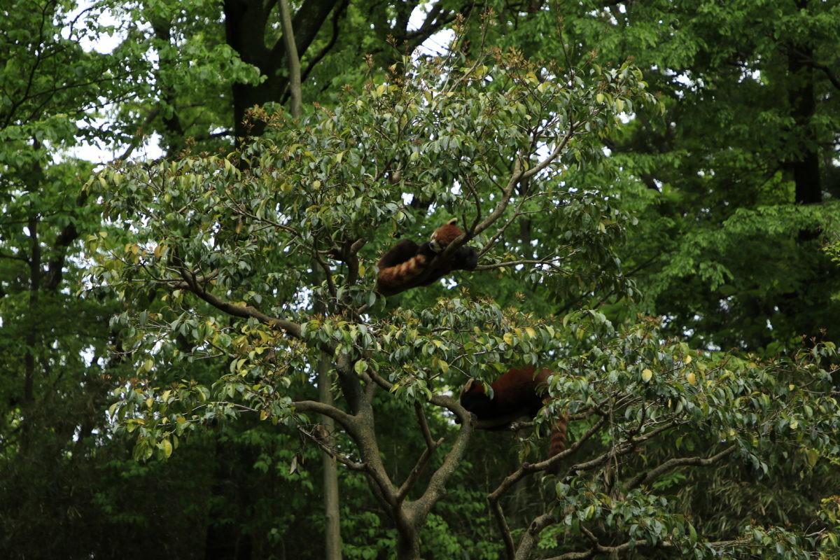 ↑木の上に何かがいるとはわかっても、柵の外からではその状況すらわかりません