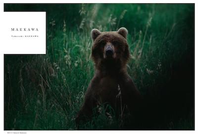 ↑前川さんの動物写真に対する矜持や作品の一部はこちらからチェックできる