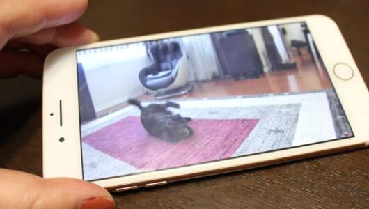 ペットを溺愛する家族が歓喜! 「AI活用ペットカメラ」がもたらした革命的進化