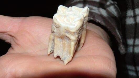 【ムー巨人伝説】3メートルの巨人が実在した! イタリアのサルデーニャ島で発見された「巨人の歯」
