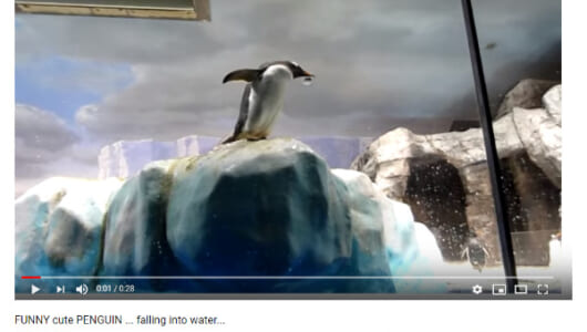 【必見オモシロ動画】あっ、危ない! ドジっ子ペンギンに待ち受ける悲劇…