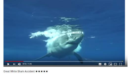 【必見オモシロ動画】映画の撮影じゃないの!? ホオジロザメが大パニックを巻き起こす