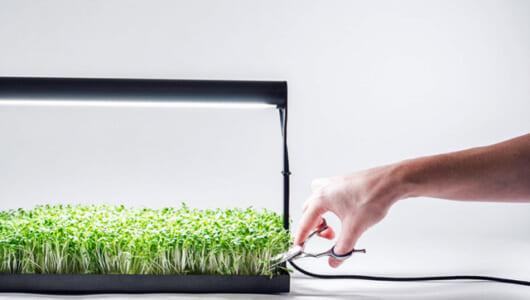 「マイクログリーン」を土なしで自宅栽培! 自給自足にもなる北米で話題の家庭菜園アイテム