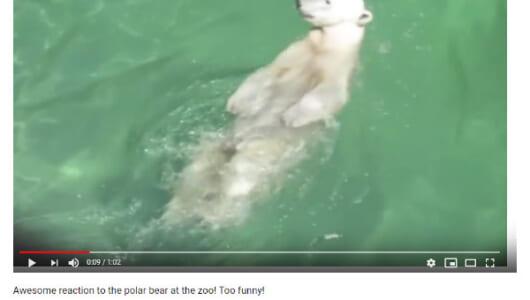 【必見オモシロ動画】思わず撮影者も爆笑!? 背泳ぎを披露するシロクマ