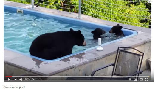 【必見オモシロ動画】レジャー施設だと思ってる? プールを楽しむクマの家族