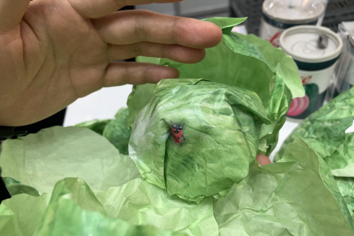 ↑レタスを剥く(=メモをめくる)と、たまにテントウムシが。メーカー曰く「無農薬のメモなもんで……」/ISOT