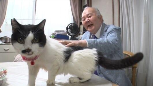 """ひふみん流""""猫と仲良くするための心得""""とは?『ひふみんのニャンぶらり』5日連続放送"""