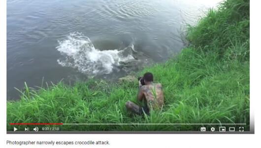 【必見オモシロ動画】「危ねぇぇ!」 巨大ワニに接近された男性の運命は!?
