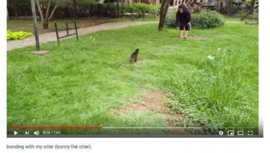 【必見オモシロ動画】もっと一緒に遊びたい! お転婆カワウソちゃんとご主人様の公園デート