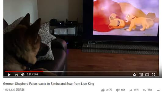【必見オモシロ動画】映画を観て泣く犬!? 『ライオン・キング』で思わず悲しくなるシェパード
