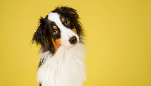 声よりもわかりやすい? 「振動ベスト」が犬とのコミュニケーションを拡大する!