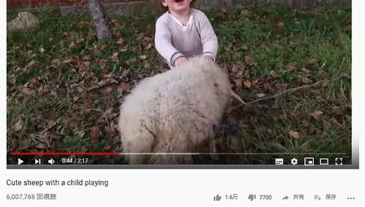 【必見オモシロ動画】こんなにフレンドリーなの!? ハイテンションで男の子と遊ぶヒツジ