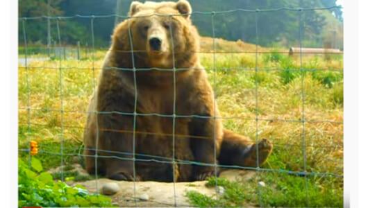 【必見オモシロ動画】フレンドリーすぎてほっこり… 手を振ってくれるクマ