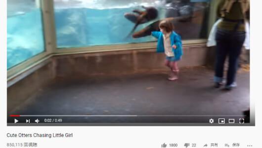 【必見オモシロ動画】心が通じ合っている!? 水族館で遊ぶ女の子とカワウソ