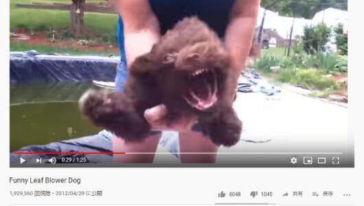 【必見オモシロ動画】もはやスター・ウォーズのチューバッカ!? 送風機に当たるワンちゃんが怖すぎる