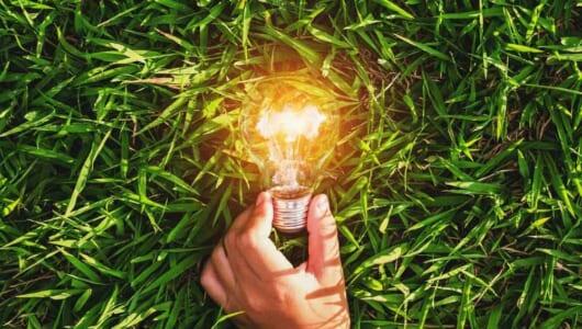 シダ植物が発電!? 自撮りもできる「植物性エネルギー」が地球環境を守る
