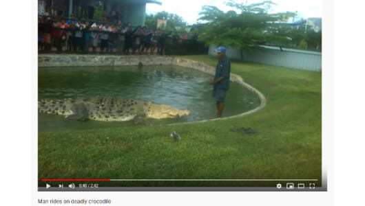 【必見オモシロ動画】恐くて見てられない…! ワニの背中にライドする飼育員