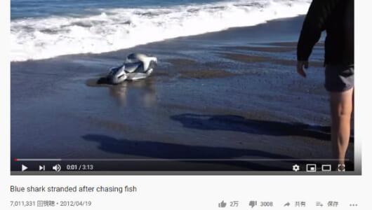【必見オモシロ動画】2人の勇気を称えたい…! 苦しむサメを救うおじさんたち