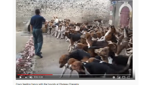 【必見オモシロ動画】いくらなんでも多すぎる!? エサをむさぼる犬の集団