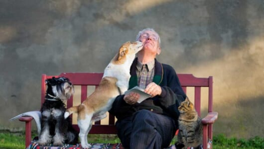 死亡リスクが30%以上も低下! 「犬」を飼うと病気に強くなることが判明