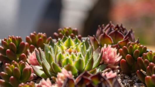年内は明日でラスト! 国内最大規模の「サボテン・多肉植物」の祭典が開催!