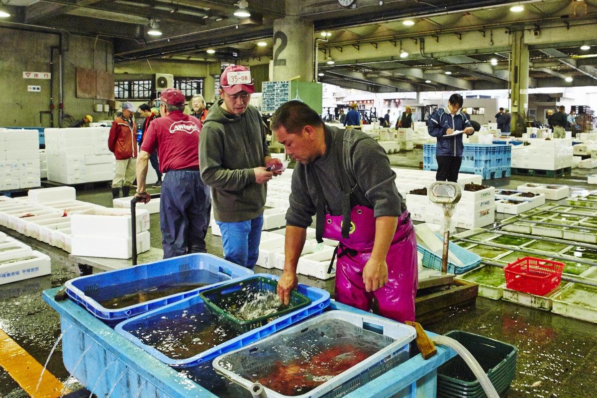 ↑ヒラメ漁師の伊予田 工さんと。撮影/寺澤太郎(『スゴイ魚料理』より)